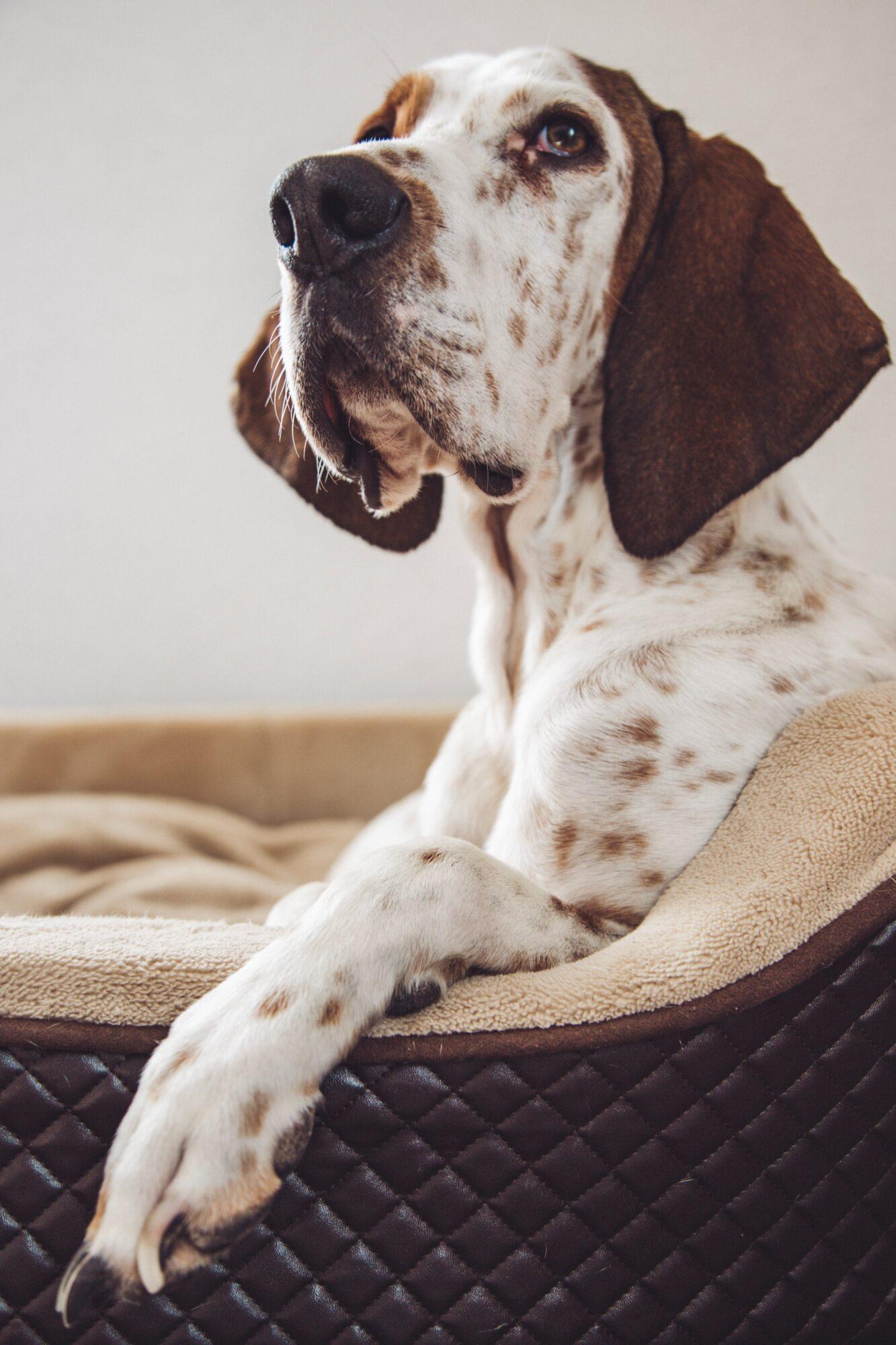 Forkæl hundene med nye hundesenge